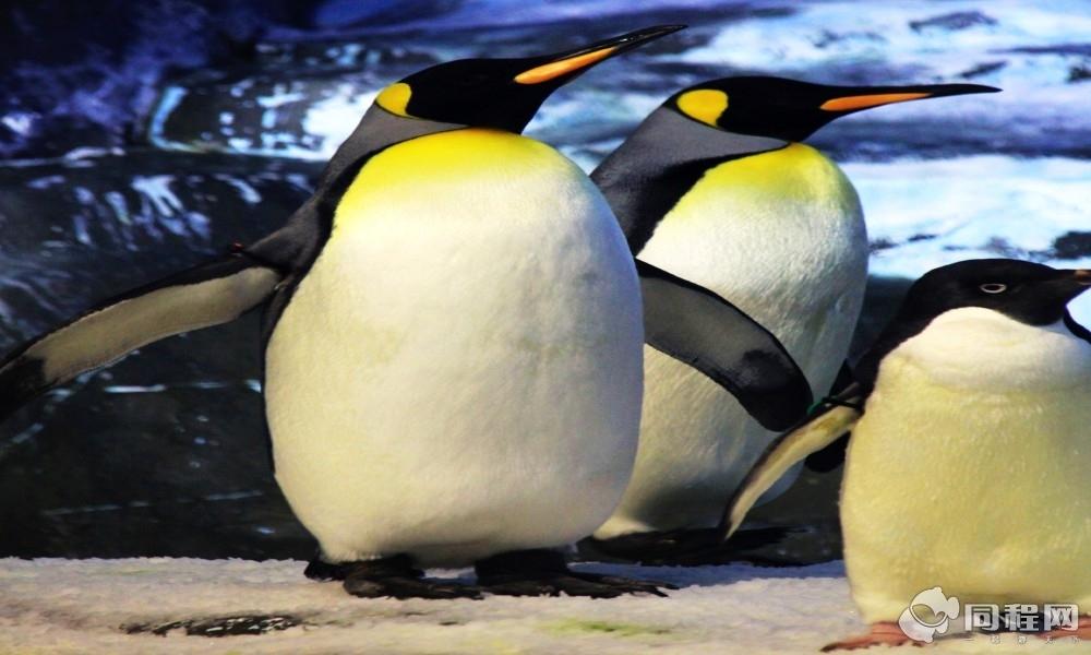 成都极地海洋世界极地动物表演馆建筑面积4.
