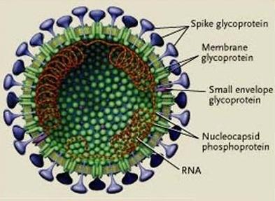 英语植物细胞结构图